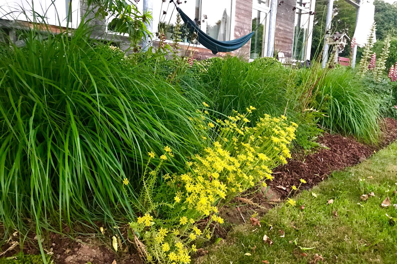 Plante Couvre Sol Soleil le secret d'un jardin sans entretien - in my french garden