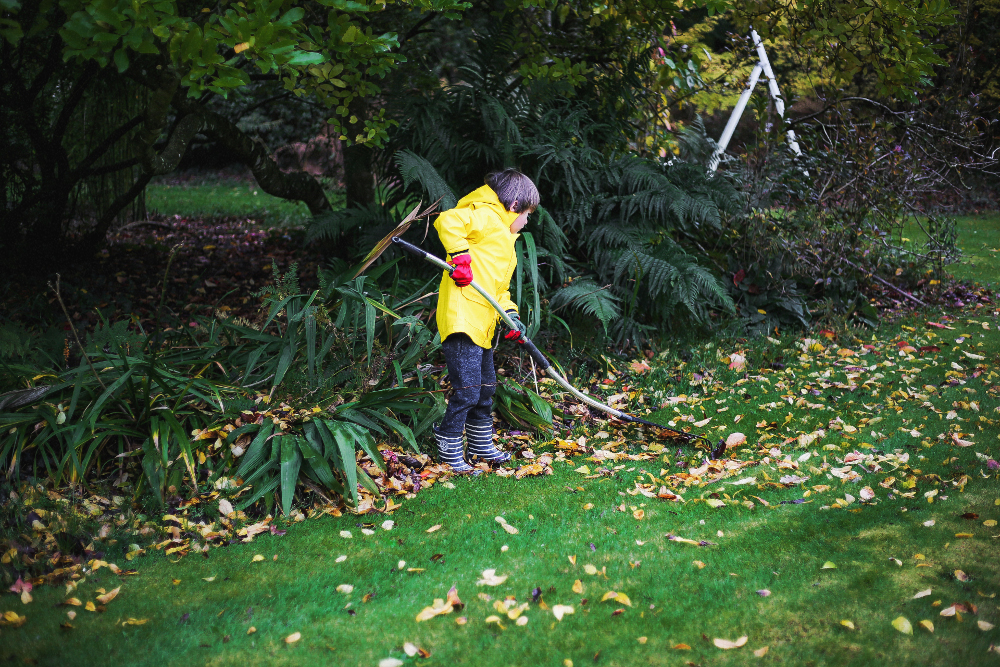 Ramassage feuilles morte 121