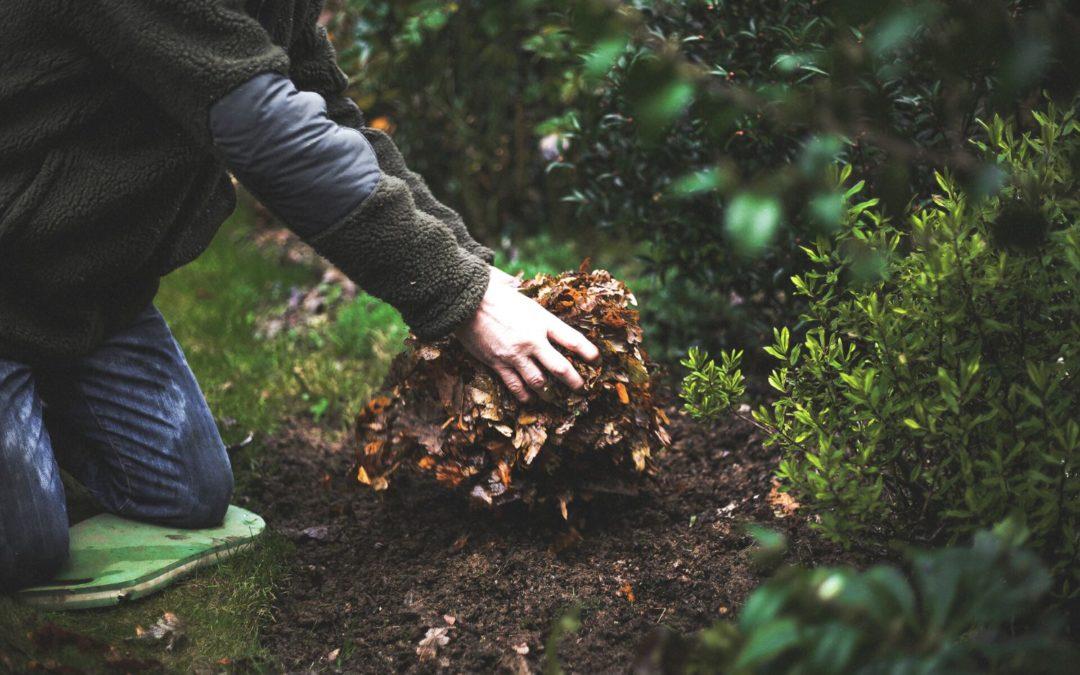L'hiver, comment protéger et enrichir mes plantes ?