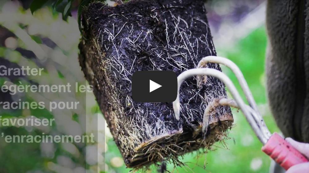 plantation arbustes vidéo