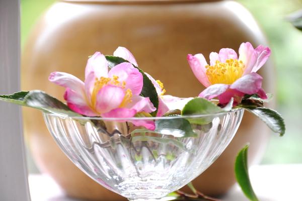 Bouquet Camélia sasanqua 2011_1448