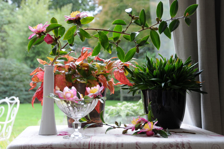 Bouquet de Camélias 2011_1461