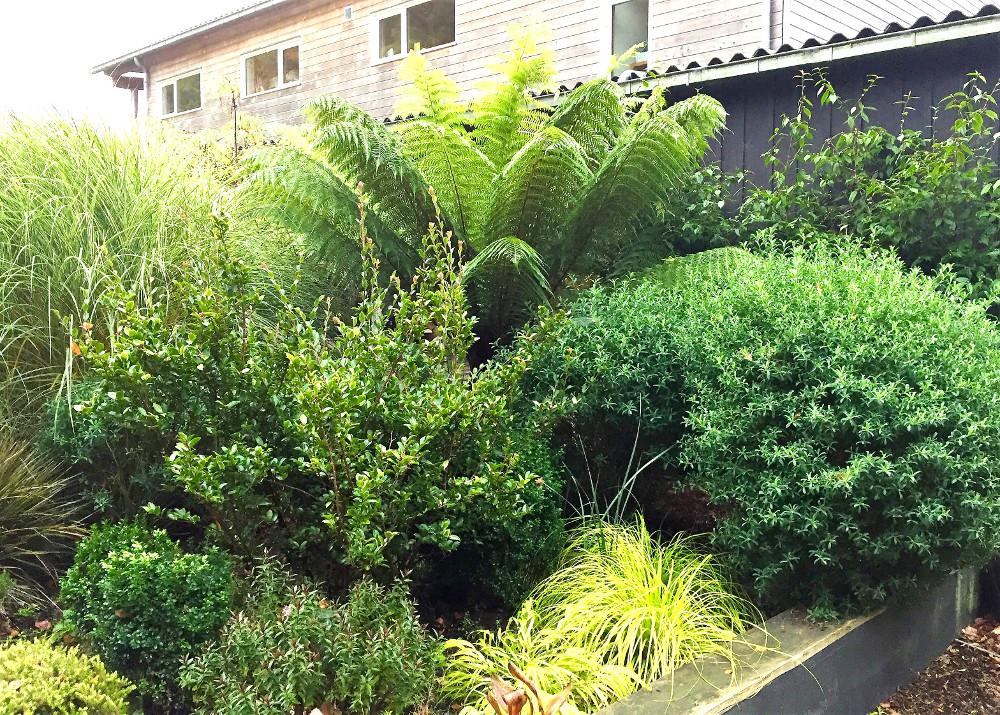 Carex Everillo et Hakonechloa