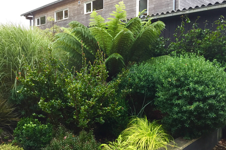 Carex Everillo et Hakonechloa jardin thomas