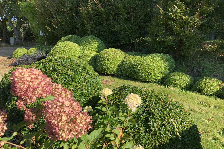 Hydrangea little lime Pittosporum Golf Ball jardin Thomas IMG_0510