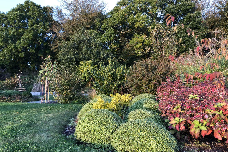 Massif Pittosporum jardin Thomas IMG_0651