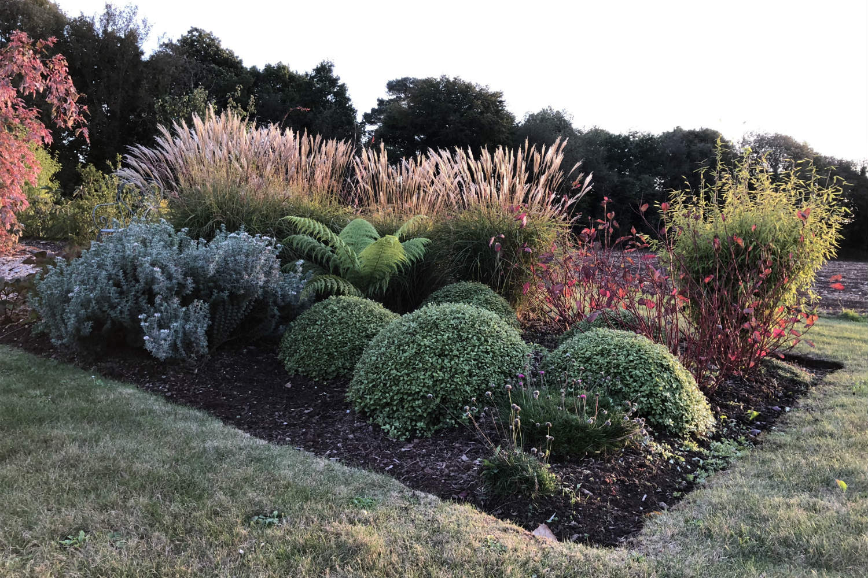 Massif jardin Thomas IMG_0642