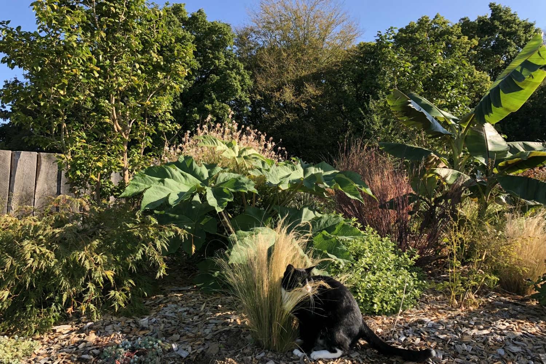 Massif jardin thomas IMG_0525
