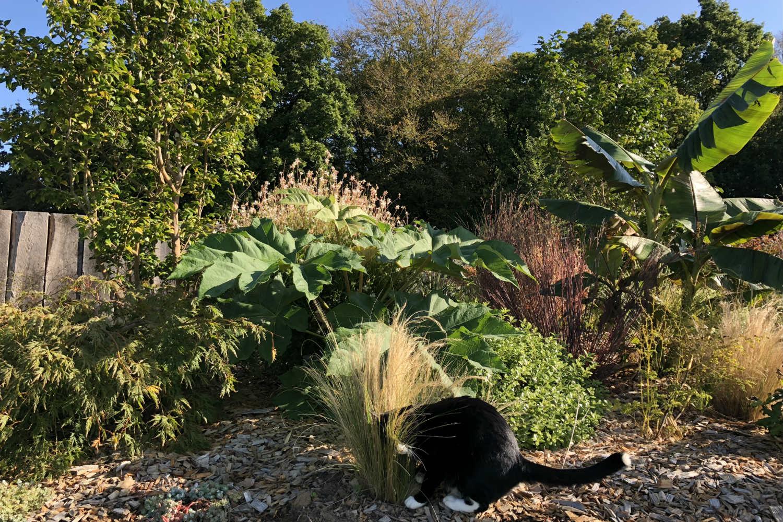 Massif tetrapanax jardin thomas IMG_0524