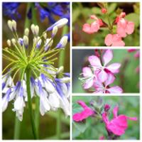 Le top des plantes vivaces en fleurs tout l'été !