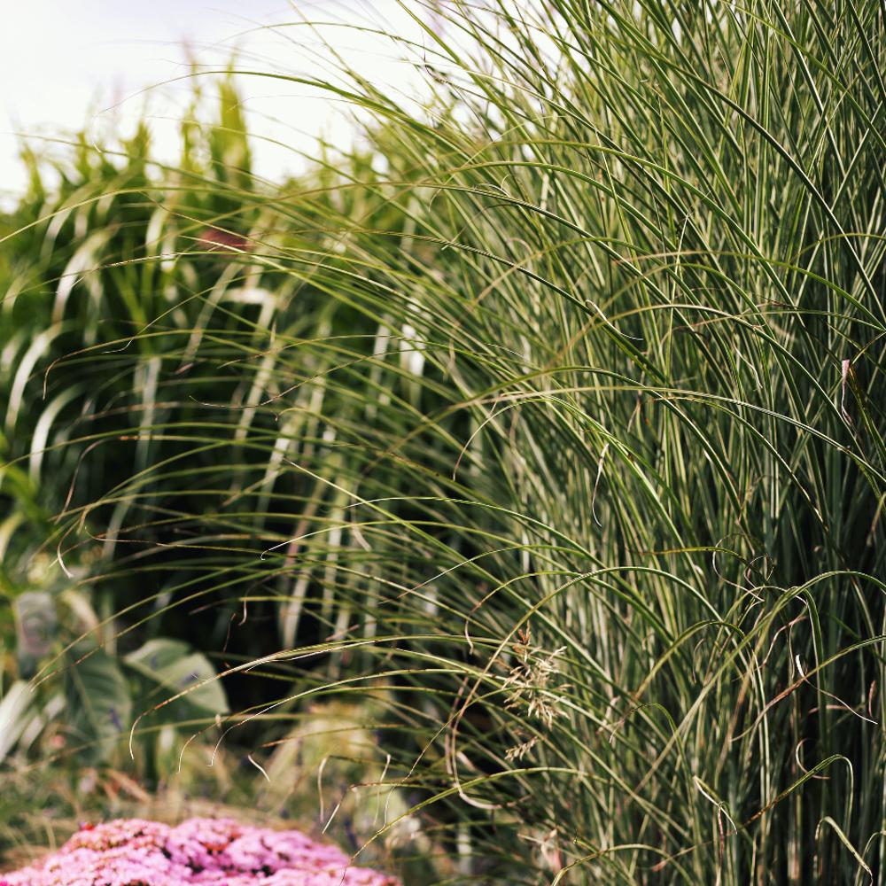 jardin thomas imfg-79 1000X1000