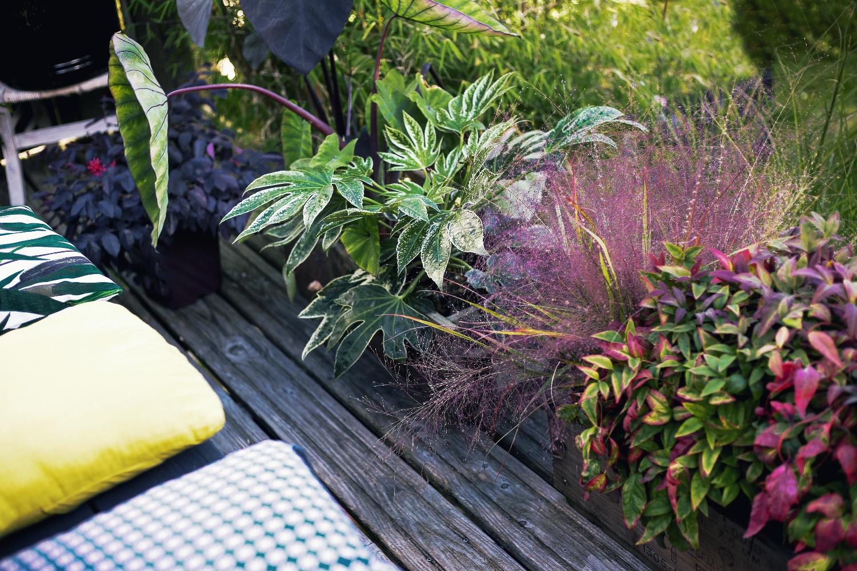 Quel Arbre En Pot Pour Terrasse quelle plante acheter pour mon jardin, mon balcon et ma