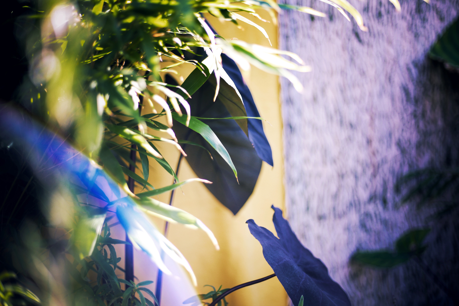 Inspiration-Tropic-Harmony-24