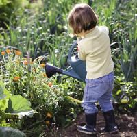 Comment bien arroser mes plantes en pot l'été ?