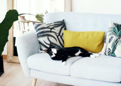 canapé et chat