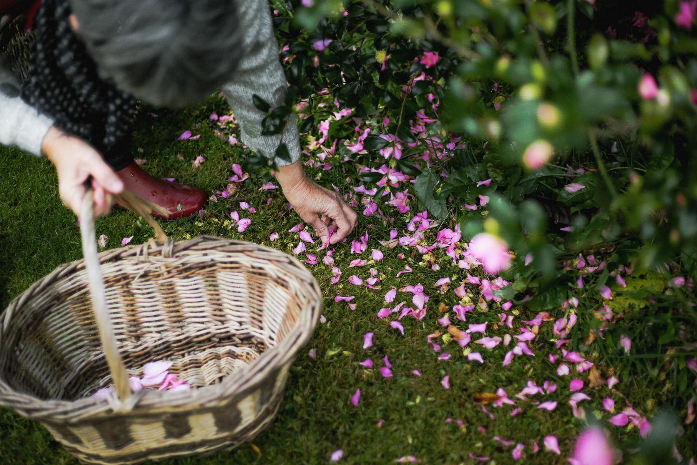 Ramassage de fleurs 128