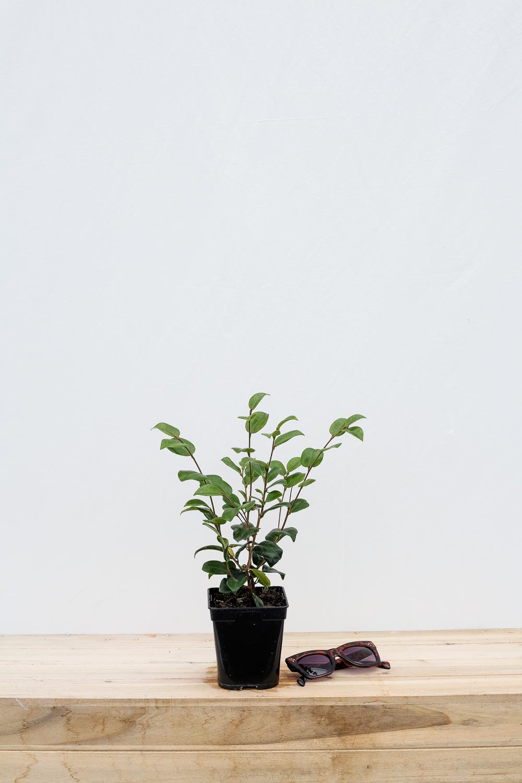 Quelle Plante En Pot Pour Terrasse quelle plante acheter pour mon jardin, mon balcon et ma