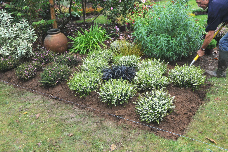 plantation de bruyère en jardin