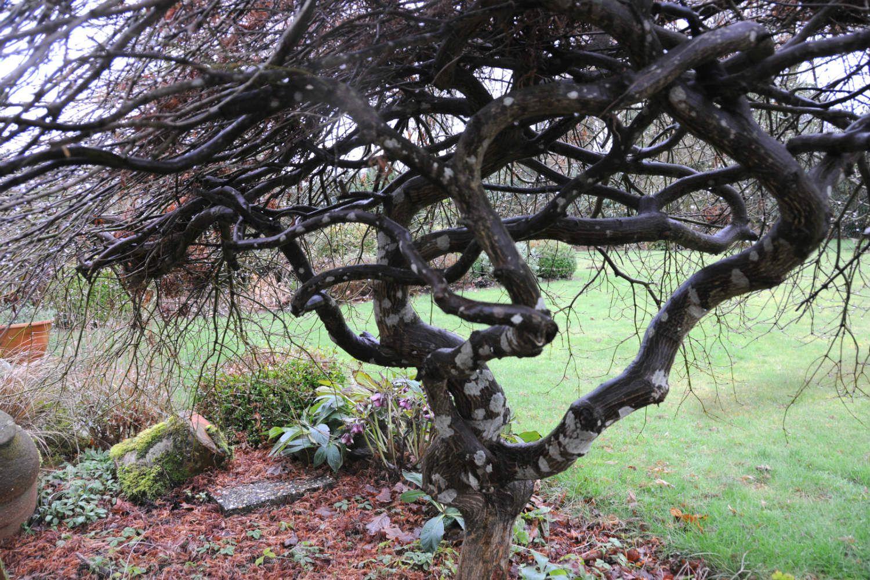 Erable jardin DSC_2978