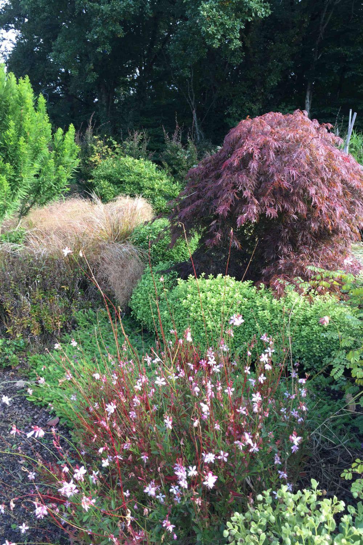 Arbuste Terrain Sec Ombre tout sur l'Érable du japon : où, quand et comment le planter