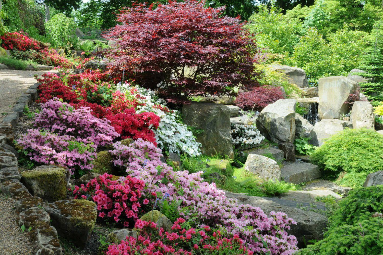 Azalées japonaises en jardin DSC_0889