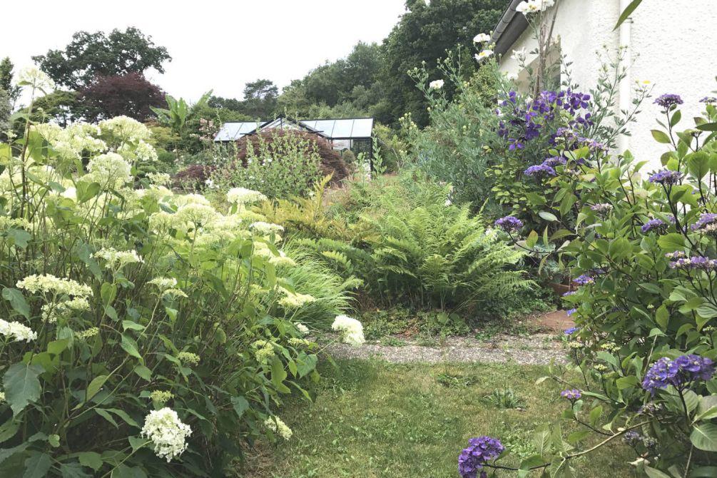fougère et hortensia annabelle IMG_4608