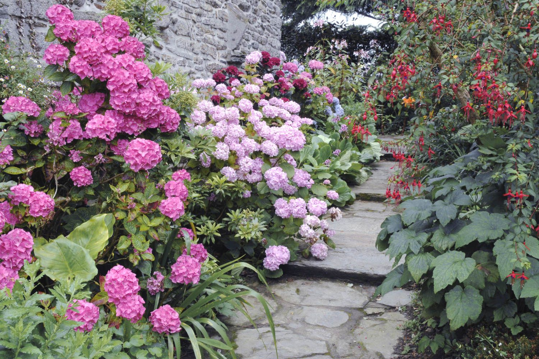 Tout sur les Hortensias : Où, quand, comment les planter ? Quel entretien - In my french garden
