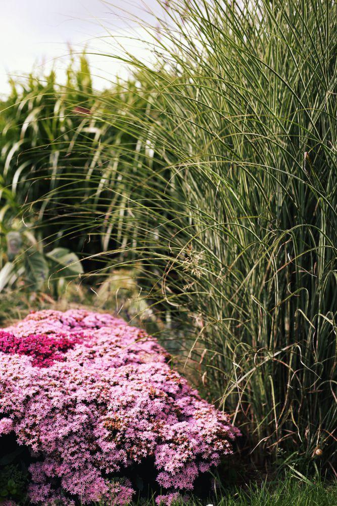 jardin thomas imfg-79