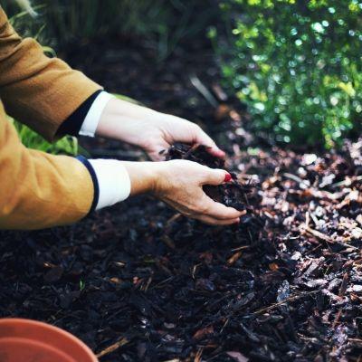 C'est quoi une plante acidophile, une plante de terre de bruyère ?