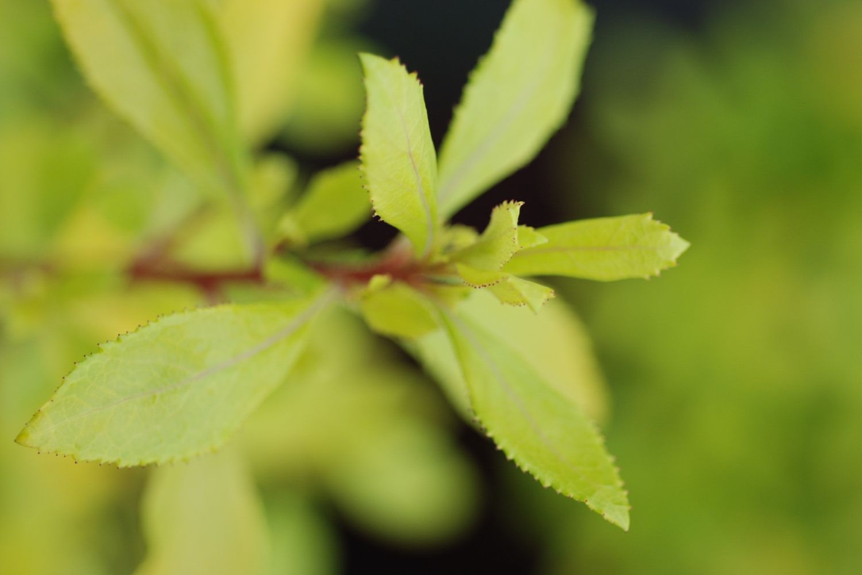 Couvre Sol Croissance Rapide quels sont les 10 meilleurs arbustes couvre-sol ? - in my