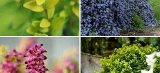 10 meilleurs arbustes couvre-sol