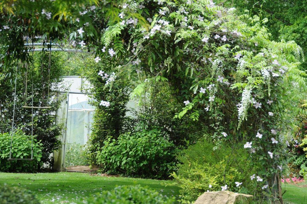 plantes grimpantes en jardin