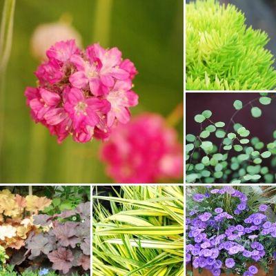 Quelles sont les 10 meilleures plantes vivaces couvre-sol ?