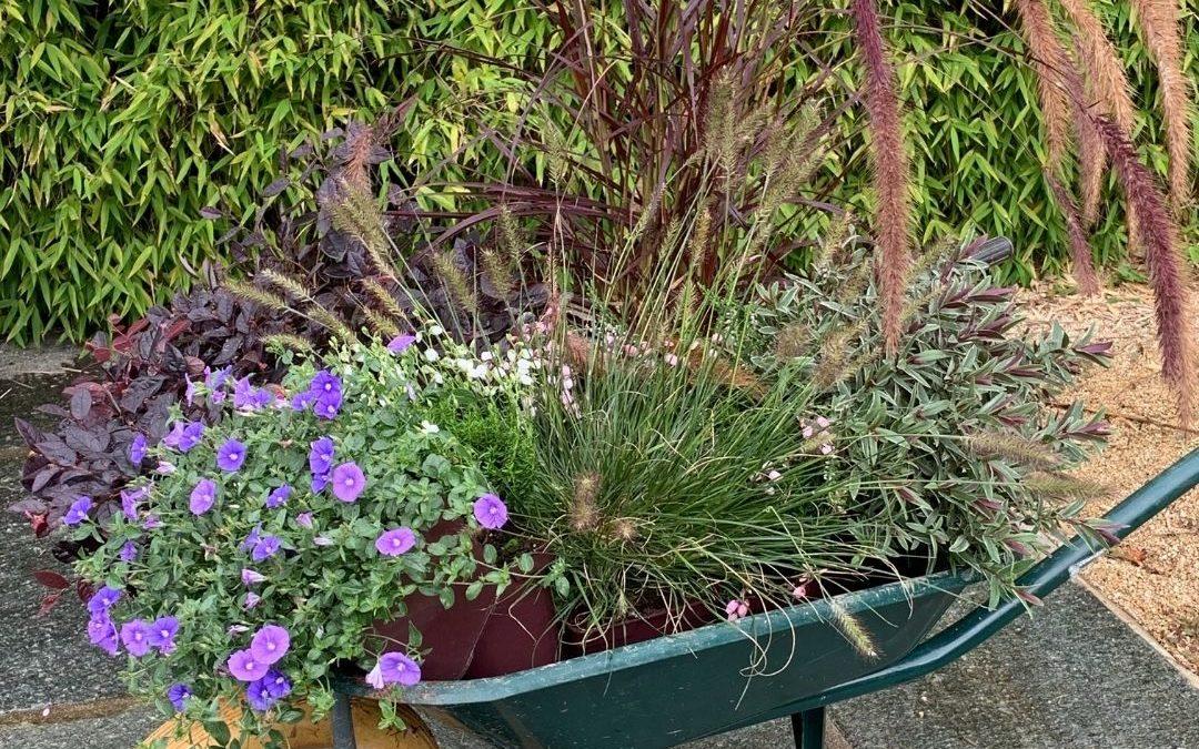 Les compositions de vivaces couvre-sols, bruyères, graminées et arbustes persistants fleuris du moment